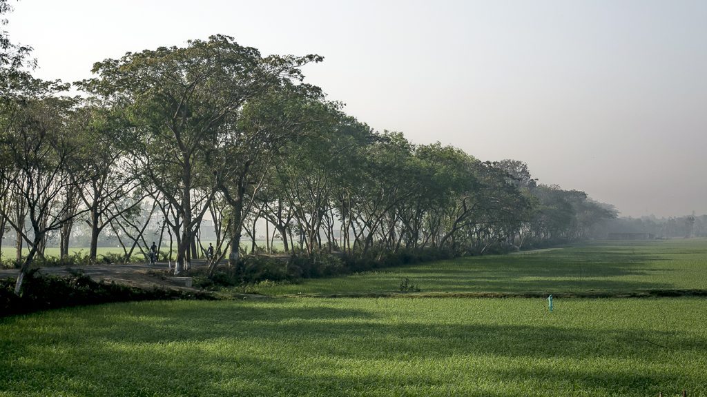 Trees lining a field.