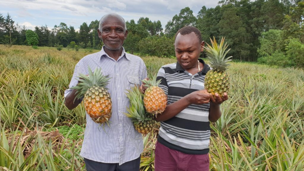 Two men stand in a field holding up pineapples.